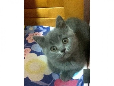 猫咪活泼可爱